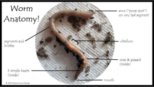Fun facts & books about worms to keep you wiggling!