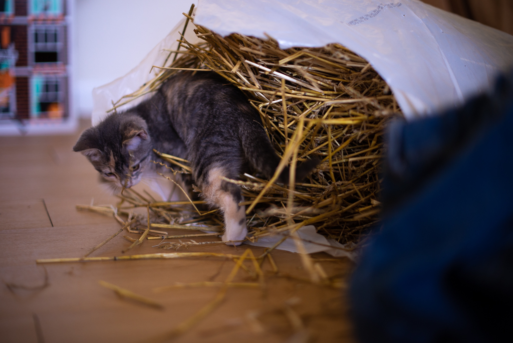 Kitten inside a bag full of straw