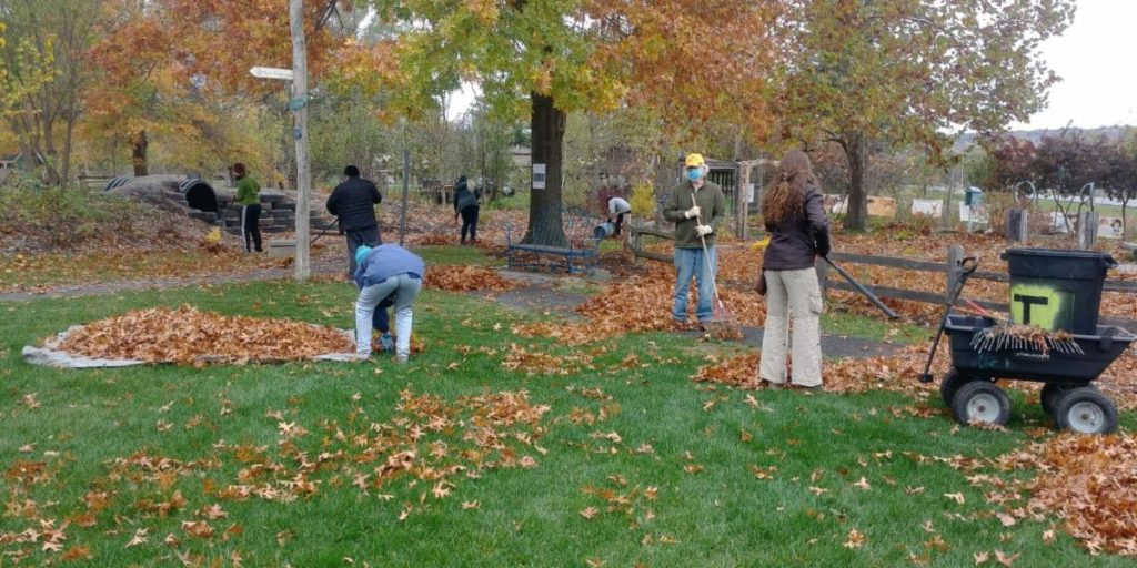Several people, safe distances and following COVID 19 protocol, raking the Garden.