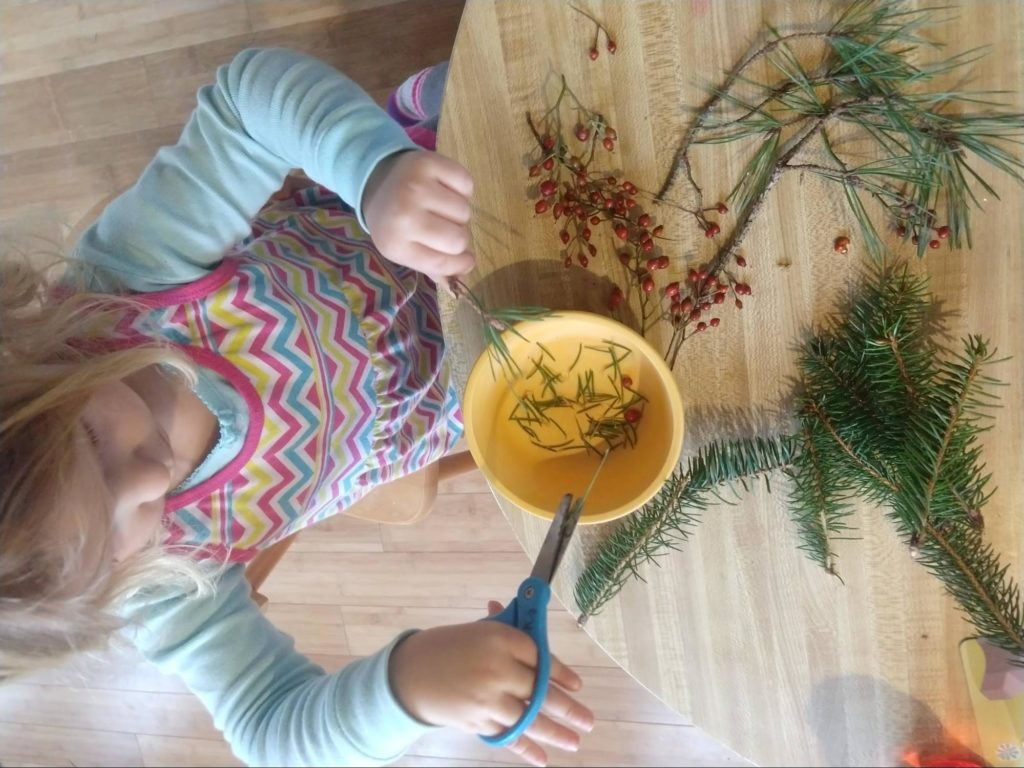 A small child holding scissors, cutting pine needles from a branch.
